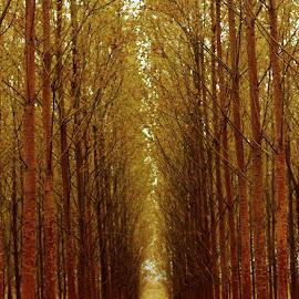 Gölyazı by Ekrem Gül - Landscapes Forests