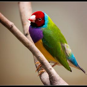 People Watching by Elk Baiter - Animals Birds ( bird, aviary, pittsburgh, colors, national aviary,  )