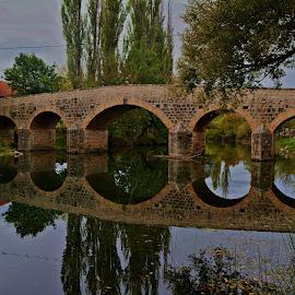 lukovi  by Jelena Puškarić - Buildings & Architecture Bridges & Suspended Structures ( reflection, nature, bridge, architecture, river )
