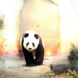 The Lost Horizon by Bjørn Borge-Lunde - Digital Art Animals ( fantasy, wild animal, bear, wilderness, nature, panda, animal )