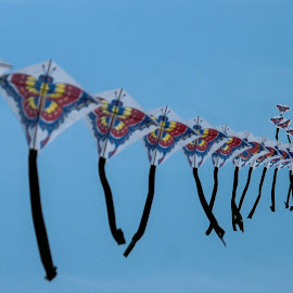 Chinese kites in a park  by Pierre Tessier - City,  Street & Park  City Parks ( kite, china,  )