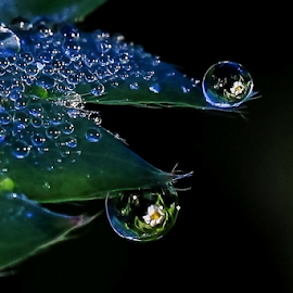 Dew Drop Strawberry Blossoms by Monica Hall - Nature Up Close Natural Waterdrops ( wisconsin', monica hall photography, dew, reflections, dew drops, strawberry,  )