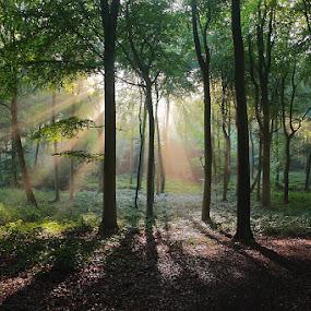 Summer Woods by Ceri Jones - Landscapes Forests ( woods forest )