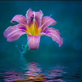 Flower by Jana Vondráčková - Flowers Single Flower