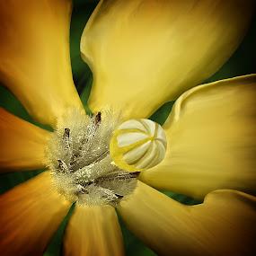 Yellow Gardenia by Joseph Vittek - Flowers Single Flower ( gardenia, macro, april, bloom, yellow, blossom,  )