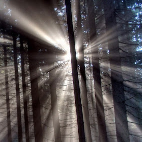 Trees by Brennan Adamus - Instagram & Mobile Other (  )