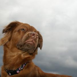 Molly's Good Side by Melissa Osborne - Animals - Dogs Portraits ( love, pets, best friend, dog, posing )
