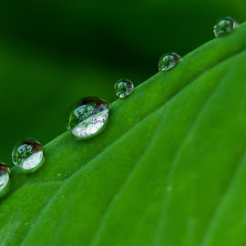 last night rain by Pranto Al Amin - Nature Up Close Other Natural Objects ( nature, d90, close )