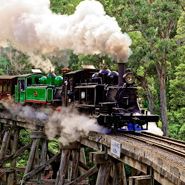 Puffing Billy  Belgrave by RJ Photographics - Transportation Trains ( steam train puffing billy train bridge trestle bridge )
