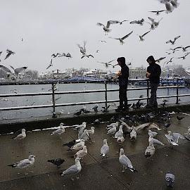 by Harold Stoler - City,  Street & Park  Street Scenes ( street, seagulls, candid, birds )