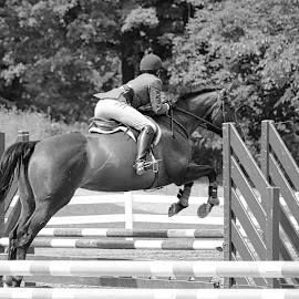 Jumper by Judy Laliberte - Novices Only Sports ( girl, horse, action, b & w, jumper )