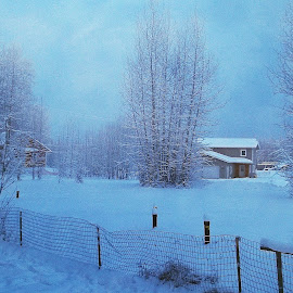 Winter in Fairbanks by Clarence Hagler - Landscapes Weather ( winter, fairbanks, alaska, snow, trees,  )