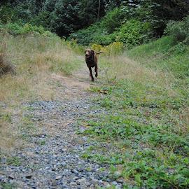 Free by Brandon Bain - Animals - Dogs Running ( photograph, pet, photographer, lightroom, dog, photo, photography )