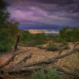 AZ Desert Weather  by Deb Bulger - Landscapes Weather ( monsoon, android, weather, dark clouds, arizona desert, desert landscape, rain )