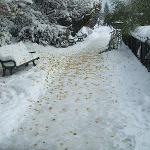 Snow 2010 072.jpg