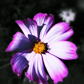 I'mNotGoodAtTitles... by Nathaniel VanOuse - Instagram & Mobile Android ( nature, colorful, black and white, flower )