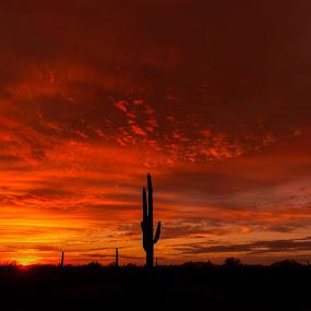 Iconic Arizona Sunset by Bryan Snider - Landscapes Sunsets & Sunrises ( arizona sunset, desert, deserts, sonoran, cacti, national monument, gila bend, sunset, arizona, nikon, landscapes, phoenix, saguaro, cactus )