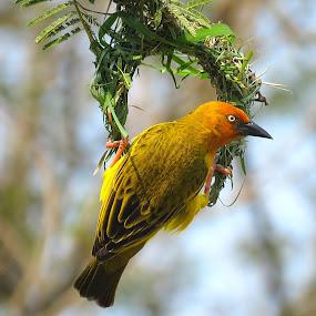 by Lanie Badenhorst - Animals Birds (  )