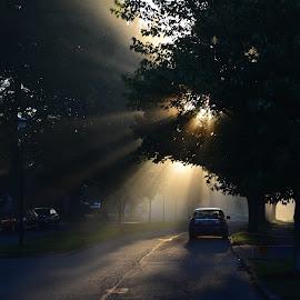 Shine down by Thomas Fitzrandolph - City,  Street & Park  Neighborhoods ( sunrise, nikon d5200, lockport ny, niagara county ny, mist, summer, morning,  )