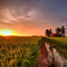 Harvesting Sunset by SyaFiq Sha'Rani - Landscapes Prairies, Meadows & Fields