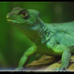 It's not easy being green by Amanda Daly - Novices Only Wildlife (  )