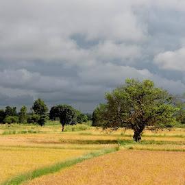 Glowing field - No filter by Amarendra Ukidwe - Landscapes Prairies, Meadows & Fields