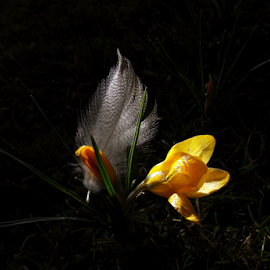 *** by Jurijs Ratanins - Instagram & Mobile Android ( mobilography, park, nature, morning, flowers, feather, city )
