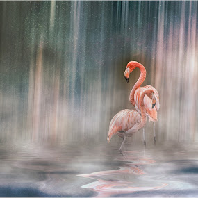 chester zoo flamingos by Stephen Hooton - Uncategorized All Uncategorized ( water, zoo, waterfall, flamingo, pink, motion, birds )