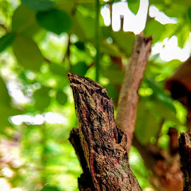 Tree by Abd Azaam - Nature Up Close Trees & Bushes ( tree, green, brown, leaves, tree trunk )