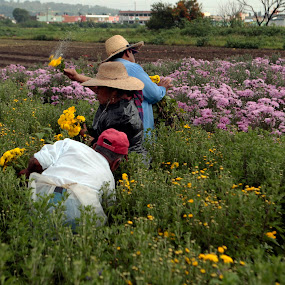 Collecting flowers by Cristobal Garciaferro Rubio - People Family ( collecting, family, flowers, flower )