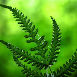 green by Kawan Santoso - Nature Up Close Leaves & Grasses