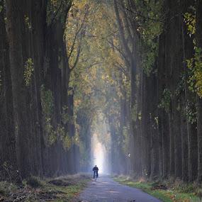 900 Poplars by Hilda van der Lee - Landscapes Forests ( nature, autumn, trees, leaves, lane,  )
