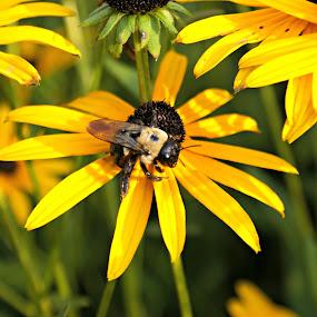 by Terri Mills - Flowers Flowers in the Wild (  )