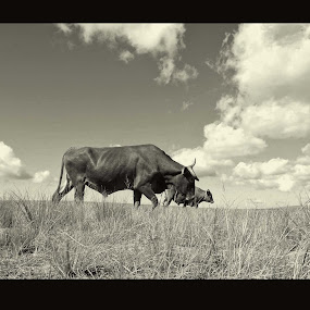 African landscape by AZilba Fotografika - Animals Other Mammals