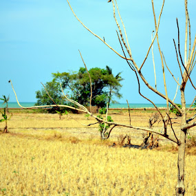 Beach side by Hery Muhendra - Landscapes Prairies, Meadows & Fields ( field, dry, indonesia, summer, beach )
