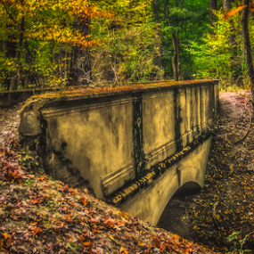 Into the forest by Opreanu Roberto Sorin - Buildings & Architecture Bridges & Suspended Structures ( up close, sopinel, grass, forest, romania, close up, sorin, tree, nature, autumn, color, fall, outdoor, bridge, opreanu, sibiu, light,  )