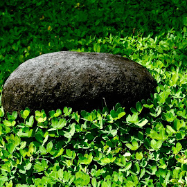 You are my ROCK!  by Carina de Pano - Nature Up Close Rock & Stone ( solid rock, grass, peanut grass, green, rock in green, rock, single rock, green grass )