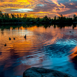 Swirling Sunset by Ken Kruse - Landscapes Waterscapes ( oregon, waterfowl, colorful, sunset, ducks, lake, swirls, pond )
