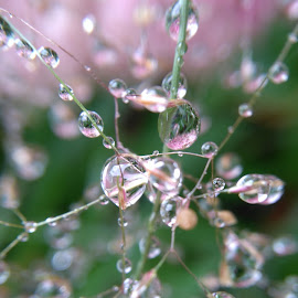 Bejeweled with droplets by Andy Entwistle - Nature Up Close Natural Waterdrops ( water, nature, flowers, rain, droplets )