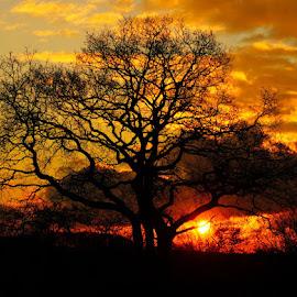 sunset  by Kim Moeller Kjaer - Landscapes Sunsets & Sunrises