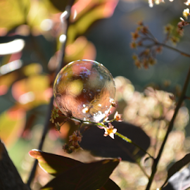 afternoon garden by Diana Orey - Artistic Objects Other Objects ( water, reflection, sunny, happy, bubbles, bush, relaxing, light, garden )