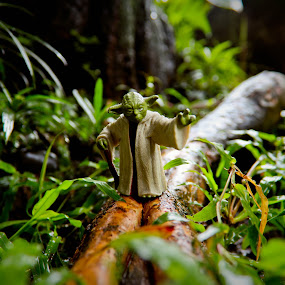 The Grand Master Jedi by Israel  Padolina - Artistic Objects Toys ( green, roots, yoda, toys, star wars, plants,  )