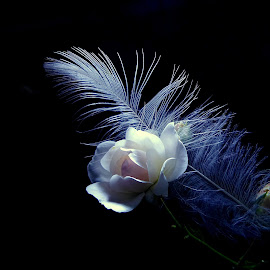*** by Jurijs Ratanins - Instagram & Mobile Android ( plant, rose, mobilography, nature, feather, flower )