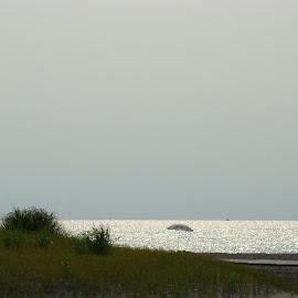 Lake Erie Sand Dunes by Gerard Zarella - Landscapes Beaches
