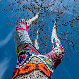 dressing the tree....  by Rui Assis - Nature Up Close Trees & Bushes ( sky, tree, blue, color, big )