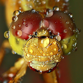 After the Rain II by Alit  Apriyana - Animals Insects & Spiders