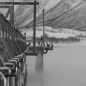 Wintertime by Benny Høynes - Black & White Landscapes (  )