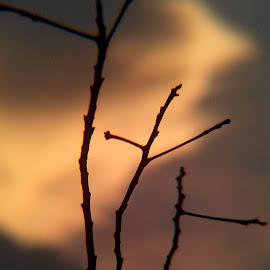 by Eko Murdianto - Landscapes Sunsets & Sunrises