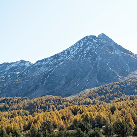 Segl-Maria, Graubünden, Switzerland by Serguei Ouklonski - Landscapes Mountains & Hills ( plant, mountain, wood, range, no person, yellow, travel, valley, landscape, nature landscape, sky, tree, nature, autumn, foliage, no people, mountain peak, switzerland, weather, light, conifer, orange, hill, scenics, atmosphere, forest, scenic, beauty in nature, graubunden, clear sky, fair weather, season, mountain range, color, blue, fall, outdoors, day, high, daylight, hike )
