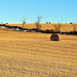 Hay Field by Linda    L Tatler - Landscapes Prairies, Meadows & Fields
